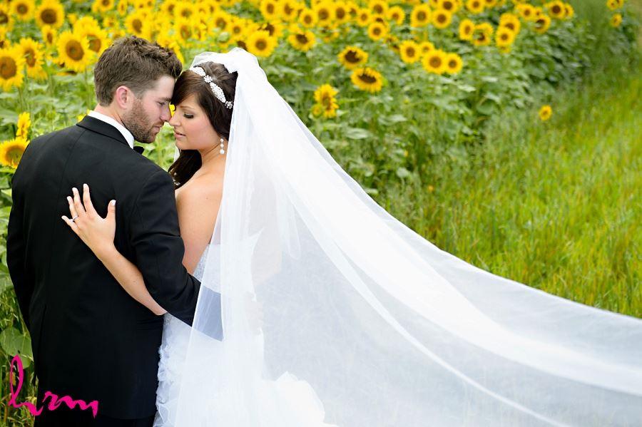 Bride and Groom in Sunflower field Cambridge Ontario