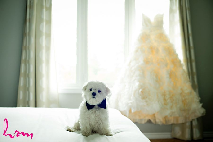 dog and wedding dress in wedding photo