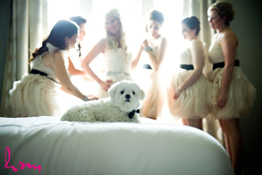 Wedding photo of dog in foreground bride and bridesmaids in background