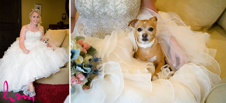 Bride with dog chihuahua on wedding day