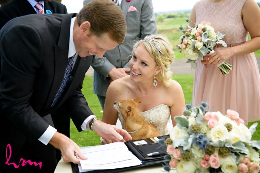 Dog at wedding ceremony in veil with bride and groom during signing