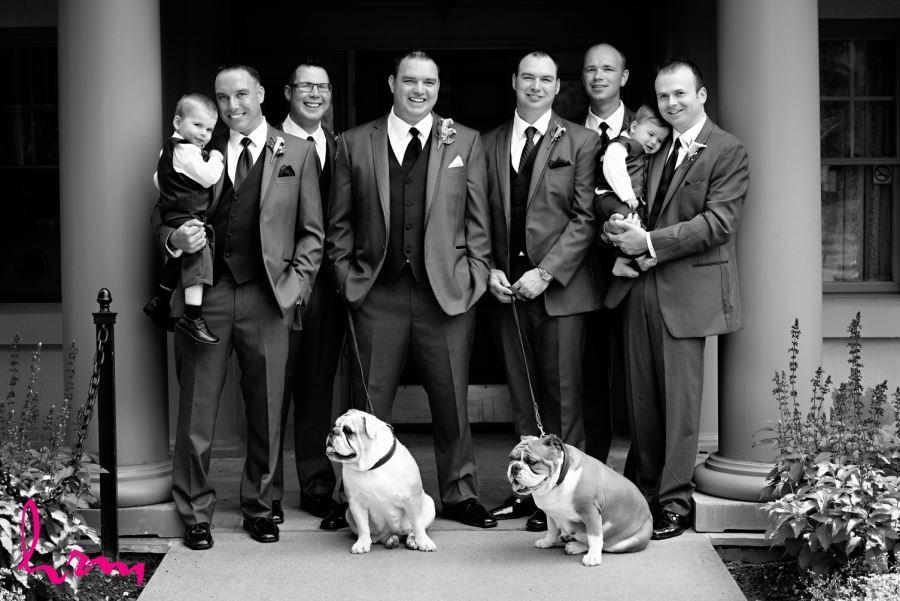 groomsmen with bulldogs wedding day
