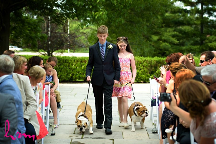 bulldogs in wedding party walking down aisle