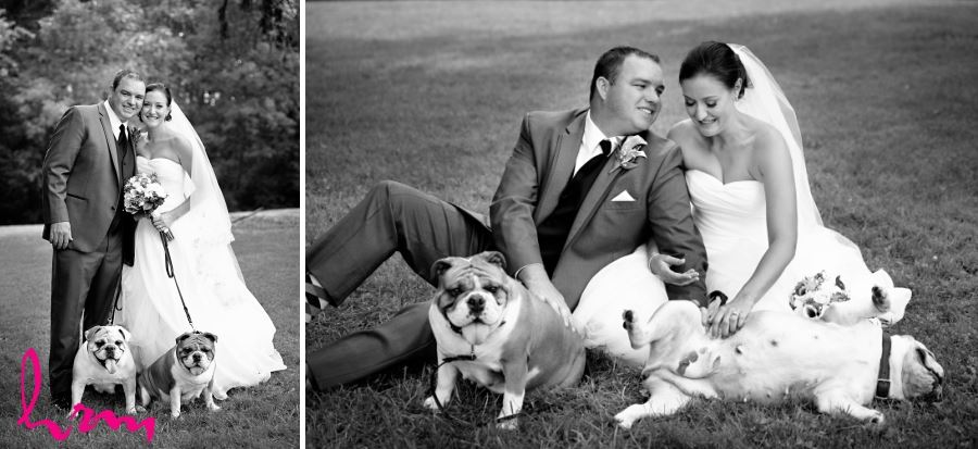 bride and groom and dogs wedding day